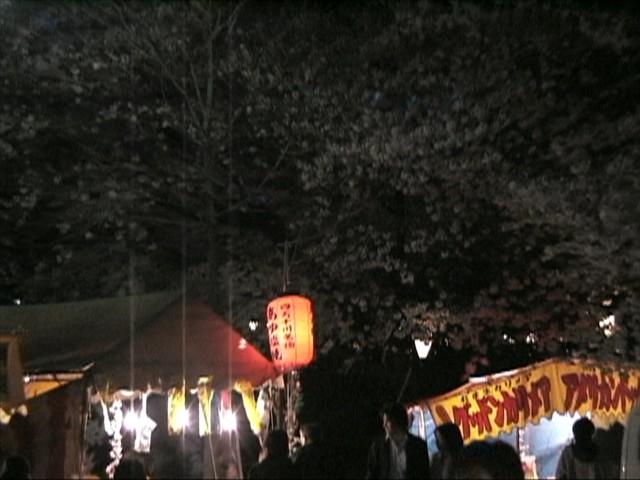 鶴舞公園の夜桜070331_2