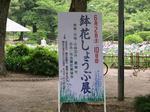 鶴舞公園の花しょうぶ5.jpg