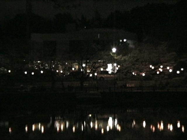 竜ヶ池の夜桜(1)