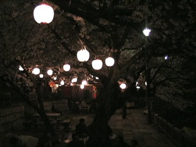 竜ヶ池の夜桜(2)