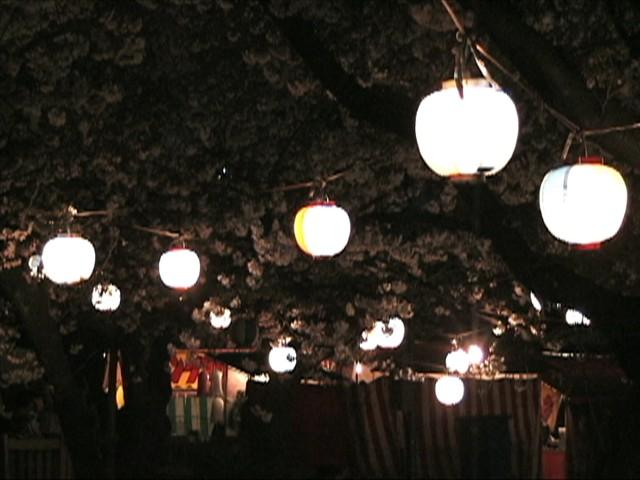 竜ヶ池の夜桜(4)